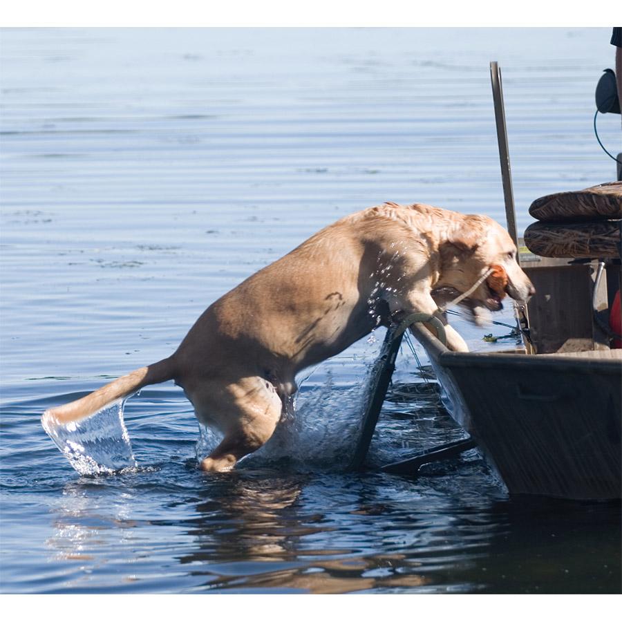 Dog Boat Ladder Duck Hunting Best Ladder 2018